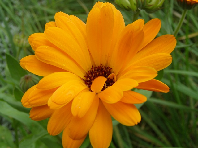 Marigold 184659 640 All Things Flowers Blog By Sydney Florists
