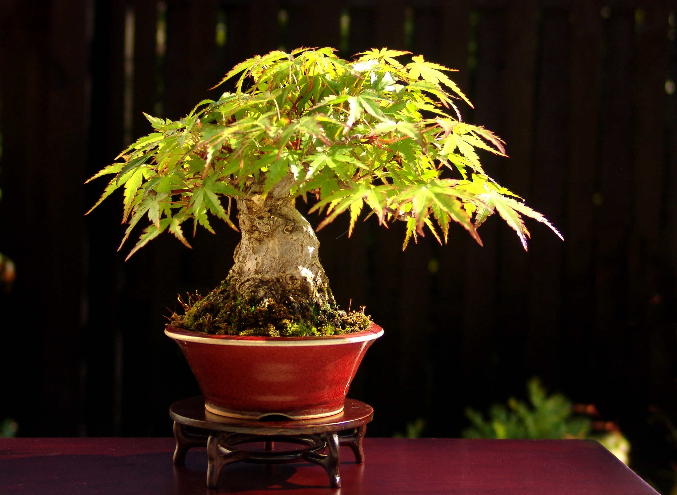The Most Influential Bonsai Artists From Outside Japan All Wiring Demo Course To Follow Where You Will Get Both Design Advice And Growing Techniques Mix That With Books People Have A Lot Of Fun