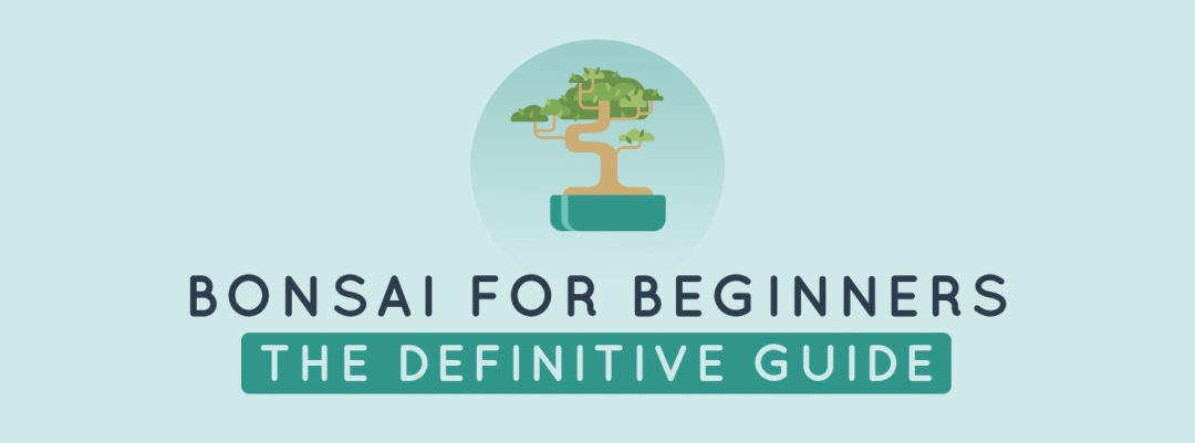 Outstanding Bonsai For Beginners The Definitive Guide All Things Flowers Blog Wiring 101 Cajosaxxcnl